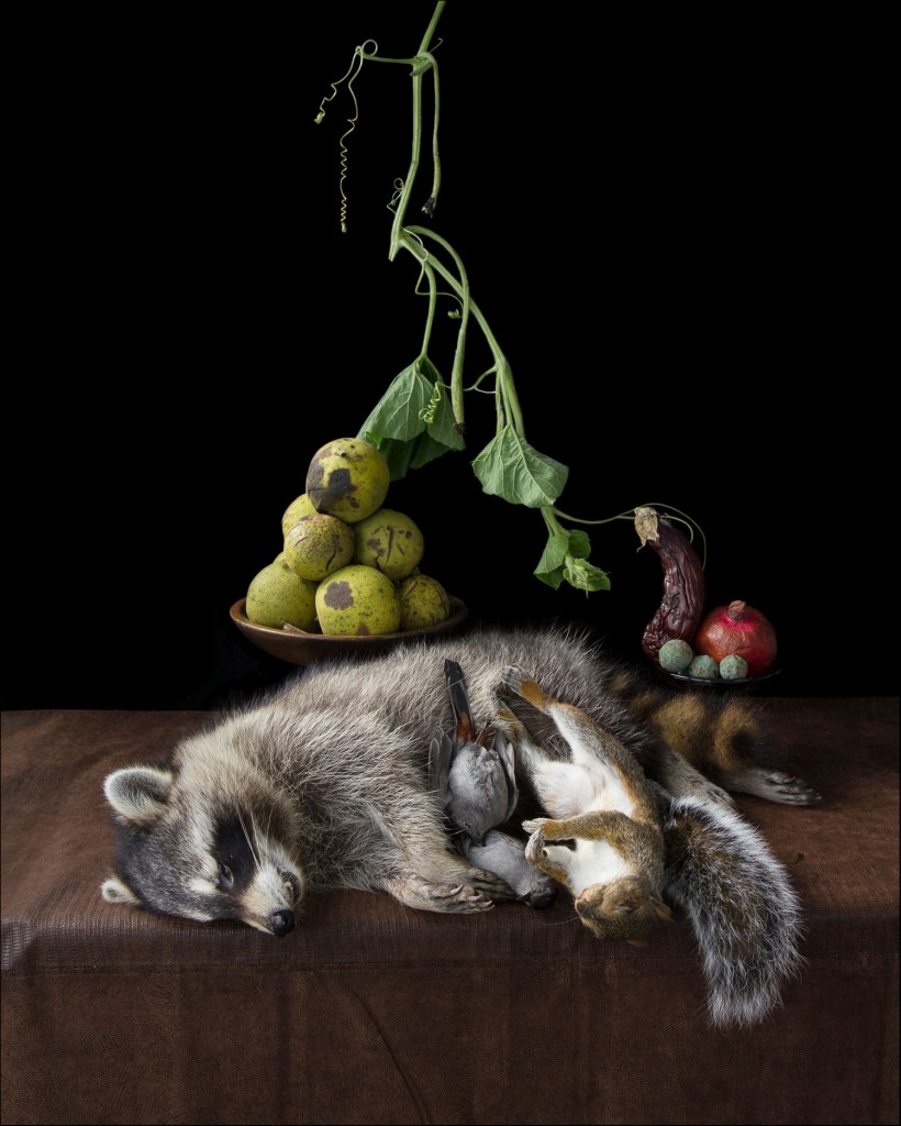 Raccoon by Kimberly Witham